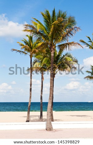 Many Palm trees in the beach, Miami, Florida with the ocean in front of them - stock photo