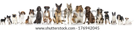 Many pedigree dogs - stock photo