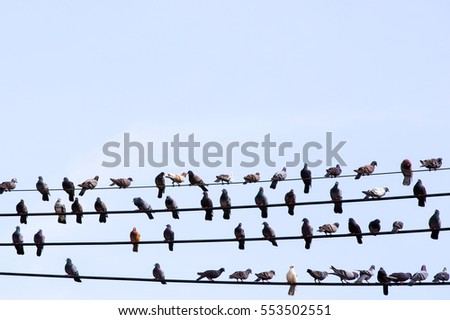 Many pigeons are resting on cable.