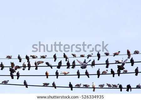 Many Pigeons are resting on the wire.