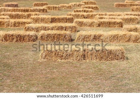 many piles of straw on field, straw bales after harvest,selective focus - stock photo
