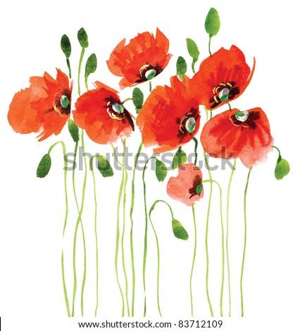 Many poppies - stock photo