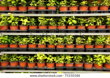 Many pots with a green plants