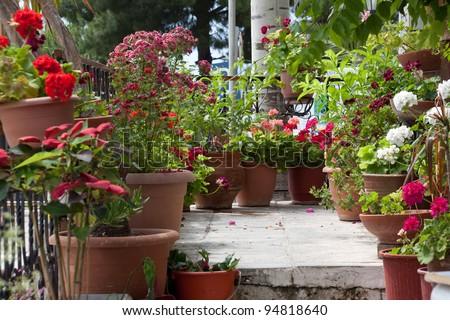 Many potted flowers on balcony - stock photo