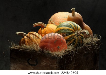Many pumpkins in a barn - stock photo