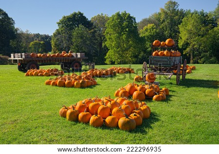 Many Pumpkins in Wagons and on Grass at Farmer's Market - stock photo