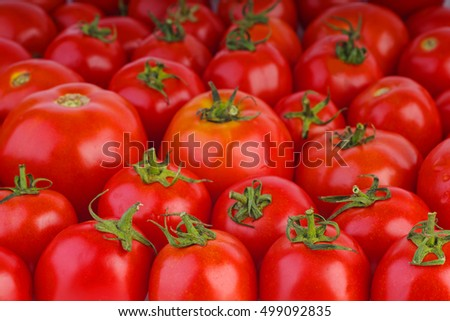 Many red ripe tomatoes. Shallow DOF. Focus point in lower part of image
