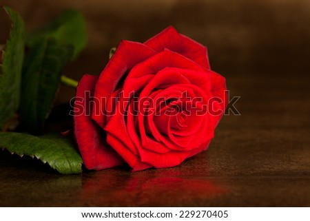 many red rose in shallow DOF - stock photo