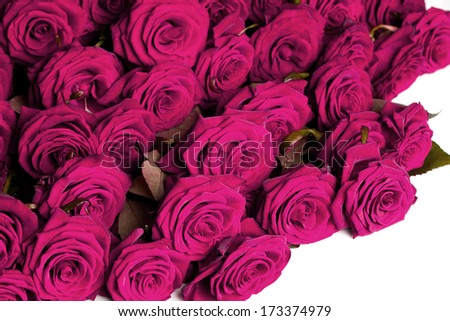 many red roses in shallow DOF - stock photo