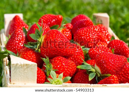 Many red Strawberries in a basket - stock photo