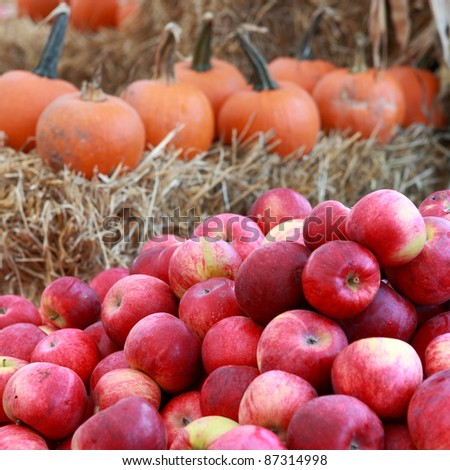 Many Ripe red apples with pumpkins in the background