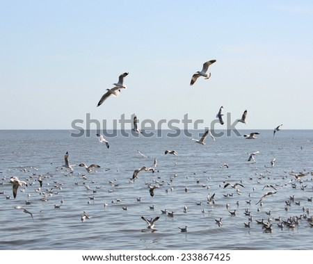 many seagull flying in sky