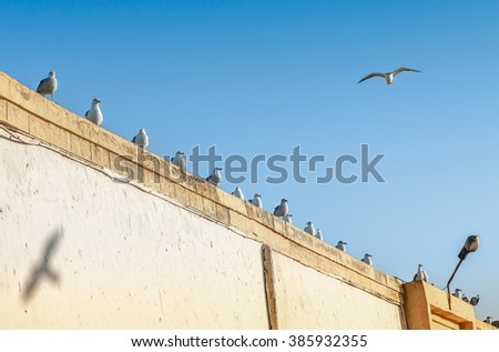Many seagulls perched on a wall - stock photo