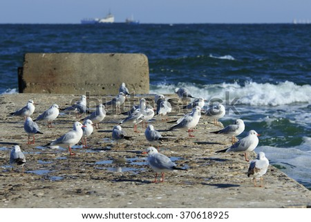 many seagulls rest at a pier in the stormy sea with ships at horizon - stock photo