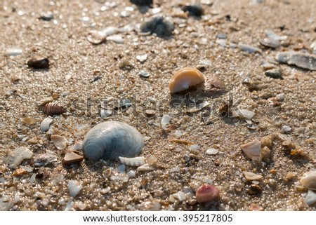 Many shells on the sand of the sea