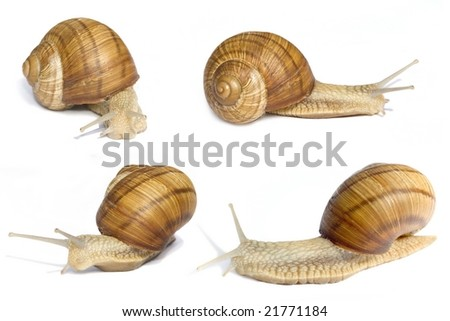 Many slippery snails on a white background - stock photo