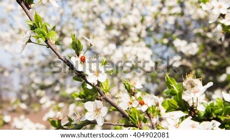 Many small flowers and buds with green leaves - stock photo