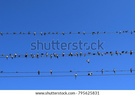 many swallows on wires