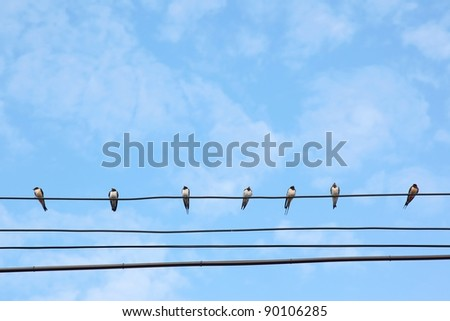 Many swiftlets on main wire under blue sky.