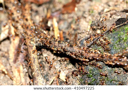 Many termite Migratory - stock photo
