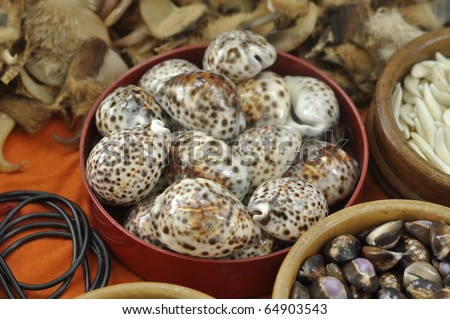Many Tiger Cowrie Shell - stock photo