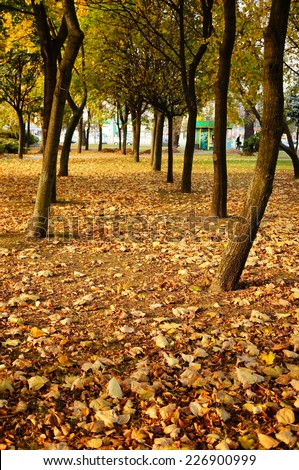 Many trees at a park with autumn leaves