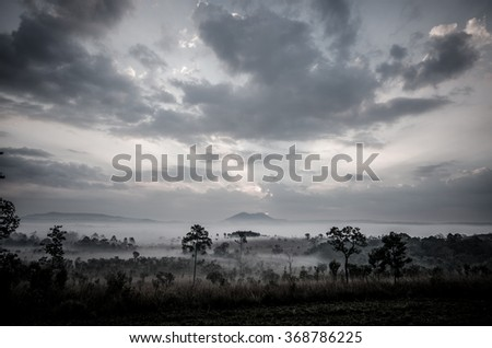 Many trees in the moring mist and sunrise, Black and white - stock photo
