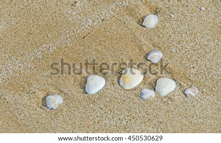 Many type of sea shells on the beach sand, Black Sea shore, texture outdoor