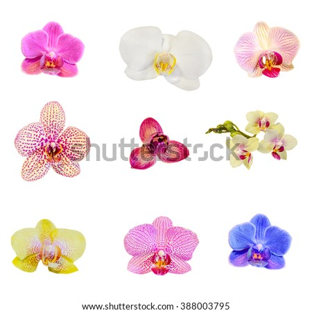 Many types, collection of orchids flowers, purple, white, blue, yellow, pink. Orchidaceae, Phalaenopsis known as the Moth Orchid, abbreviated Phal. White background, isolated. - stock photo