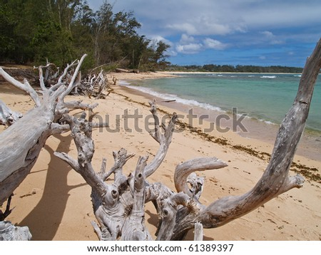 Many weathered fallen trees on an ocean beach. - stock photo