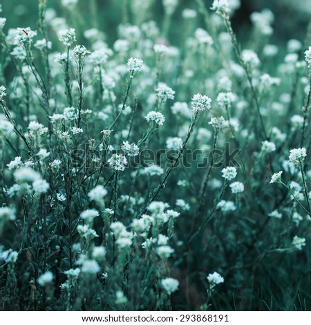 many white meadow flowers on bright green grass natural background. Fresh autumn morning - stock photo
