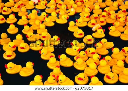 Many yellow ducks floating in the  pool - stock photo