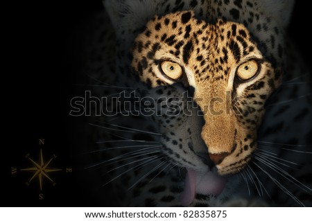 Map of wild africa on leopard's face - stock photo