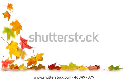 Maple autumn leaves with shadows falling to the ground, on white background.