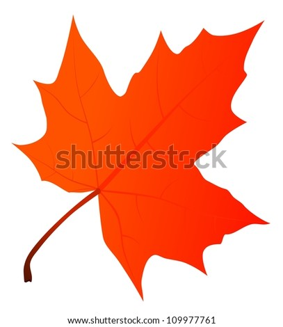 Maple leaf - stock photo