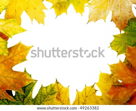 Maple leaf colour on white background