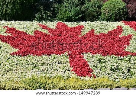 Maple leaf flower garden - stock photo