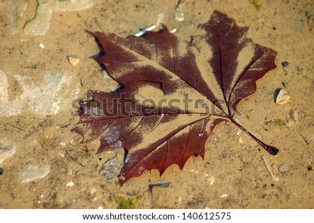 Maple Leaf under water from a puddle - stock photo