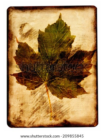 Maple leaf with a texture - stock photo