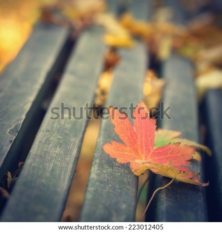 Maple leafs on the bench during autumn season, close up photo with shallow depth of field. - stock photo