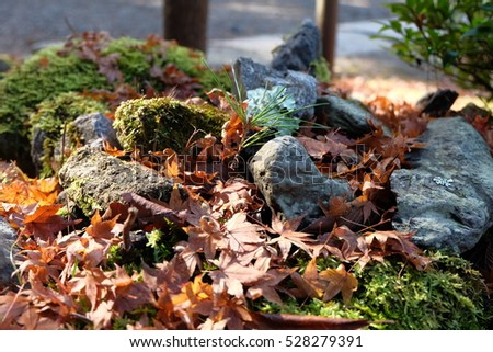 Maple leaves and rocks