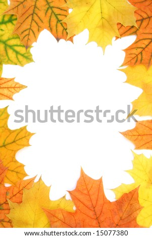 Maple leaves frame isolated on white background