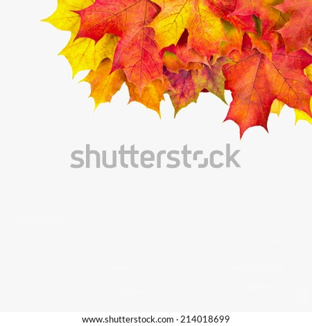 Maple leaves in autumn.Background