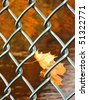 Maple leaves in chain link fence - stock photo