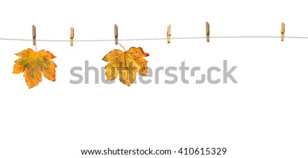 Maple leaves on clothespins with the word autumn, isolated on white background - stock photo