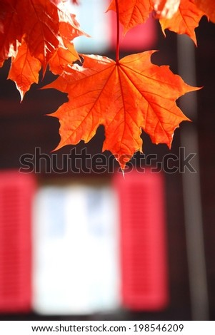 maple leaves outside the window - stock photo