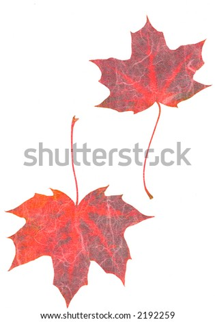 maple leaves, rice paper texture, collage, white background