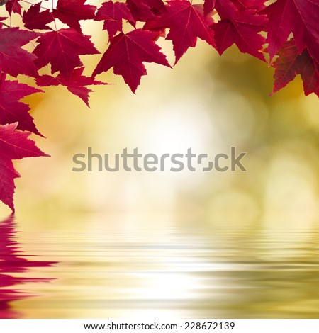maple leaves with reflection in the water, background