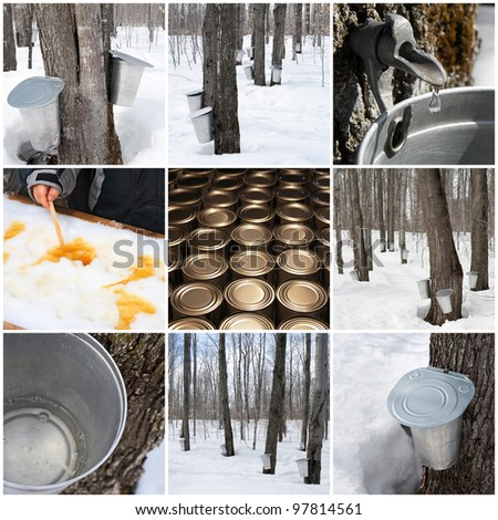 Maple syrup production in Quebec, Canada. Spring forest and buckets for collecting maple sap.