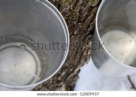 Maple syrup production. Maple sap in buckets attached to a tree. - stock photo